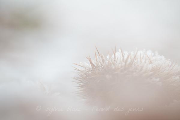 marrons 5 © sb 2014